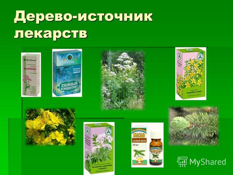 Дерево-источник лекарств