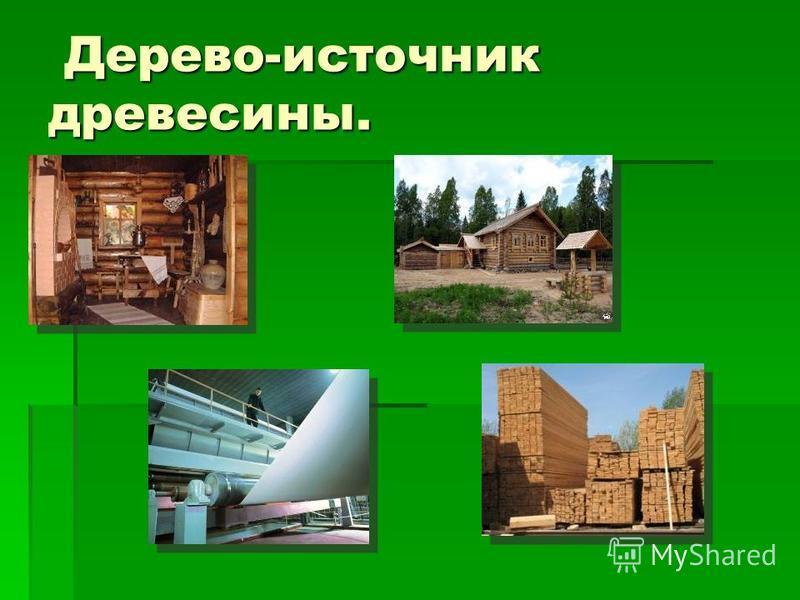 Дерево-источник древесины. Дерево-источник древесины.