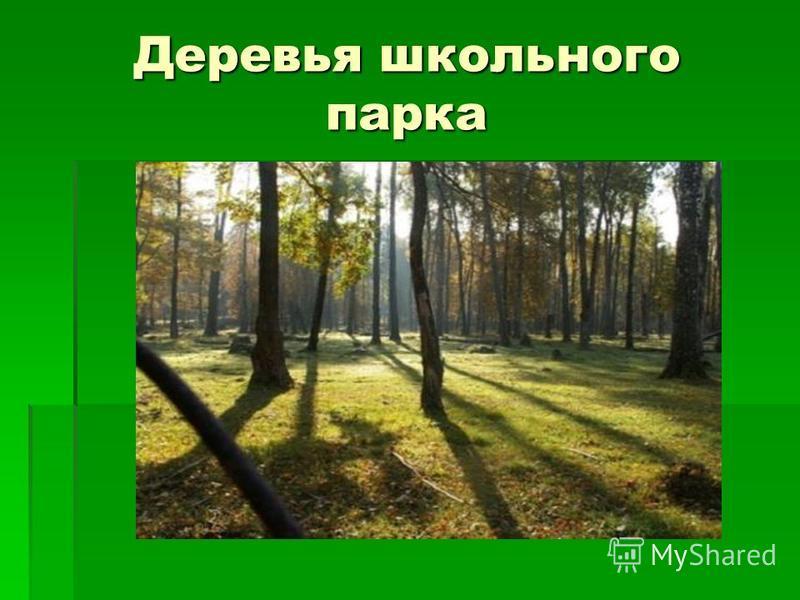Деревья школьного парка