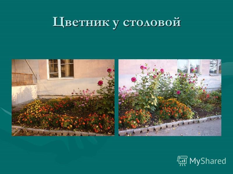 Цветник у столовой