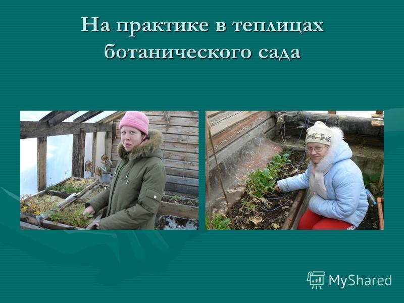 На практике в теплицах ботанического сада
