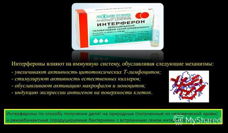 Интерфероны влияют на иммунную систему, обуславливая следующие механизмы: - увеличивают активность цитотоксических Т-лимфоцитов; - стимулируют активность естественных киллеров; - обуславливают активацию макрофагов и моноцитов; - индукцию экспрессии а