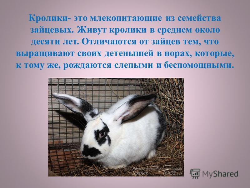 Кролики- это млекопитающие из семейства зайцевых. Живут кролики в среднем около десяти лет. Отличаются от зайцев тем, что выращивают своих детенышей в норах, которые, к тому же, рождаются слепыми и беспомощными.