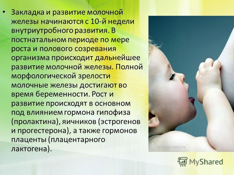 Закладка и развитие молочной железы начинаются с 10-й недели внутриутробного развития. В постнатальном периоде по мере роста и полового созревания организма происходит дальнейшее развитие молочной железы. Полной морфологической зрелости молочные желе