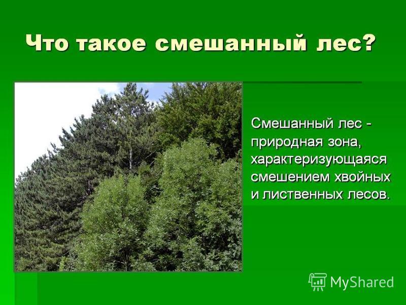 Смешанный лес-