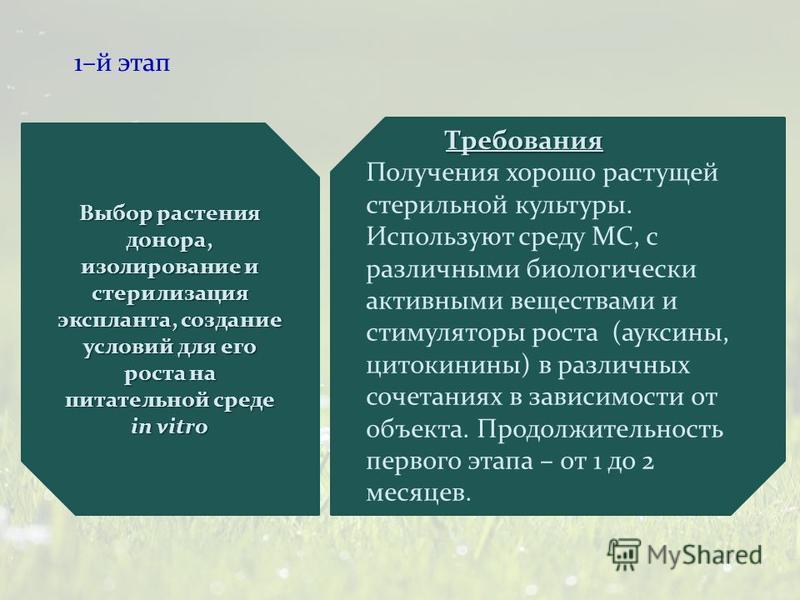 1–й этап Выбор растения донора, изолирование и стерилизация эксплантатттт, создание условий для его роста на питательной среде in vitrо Требования Получения хорошо растущей стерильной культуры. Используют среду МС, с различными биологически активными