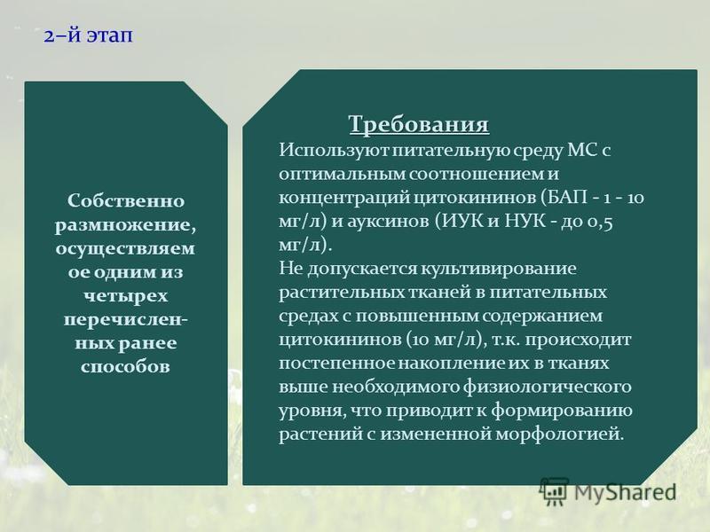2–й этап Собственно размножение, осуществляем ое одним из четырех перечислен- ных ранее способов Требования Используют питательную среду МС с оптимальным соотношением и концентраций цитокининов (БАП - 1 - 10 мг/л) и ауксинов (ИУК и НУК - до 0,5 мг/л)