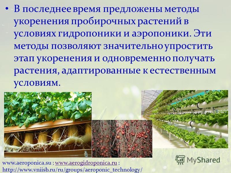 В последнее время предложены методы укоренения пробирочных растений в условиях гидропоники и аэропоники. Эти методы позволяют значительно упростить этап укоренения и одновременно получать растения, адаптированные к естественным условиям. www.aeroponi