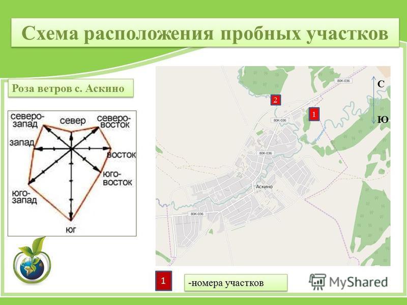 1 2 Схема расположения пробных участков Роза ветров с. Аскино С Ю 1 -номера участков