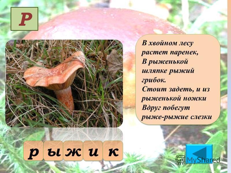 В хвойном лесу растет паренек, В рыженькой шляпке рыжий грибок. Стоит задеть, и из рыженькой ножки Вдруг побегут рыже-рыжие слезки В хвойном лесу растет паренек, В рыженькой шляпке рыжий грибок. Стоит задеть, и из рыженькой ножки Вдруг побегут рыже-р