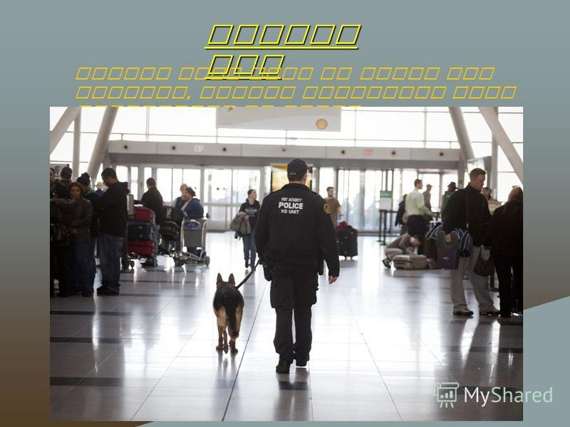 Police dog Police dogs help to serve the airport, detain criminals look explosives or drugs.