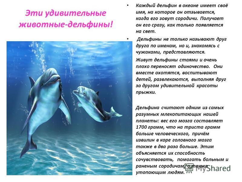 Эти удивительные животные-дельфины! Каждый дельфин в океане имеет своё имя, на которое он отзывается, когда его зовут сородичи. Получает он его сразу, как только появляется на свет. Дельфины не только называют друг друга по именам, но и, знакомясь с