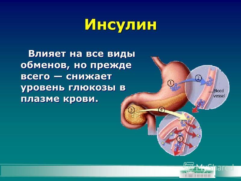 Инсулин Влияет на все виды обменов, но прежде всего снижает уровень глюкозы в плазме крови.