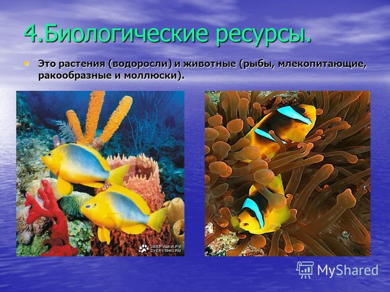 4. Биологические ресурсы. Это растения (водоросли) и животные (рыбы, млекопитающие, ракообразные и моллюски).