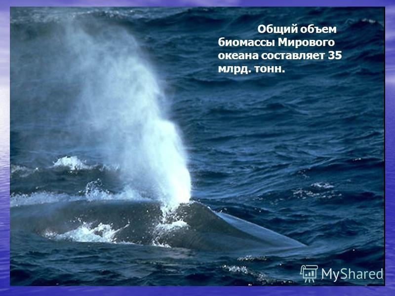 Общий объем биомассы Мирового океана составляет 35 млрд. тонн.
