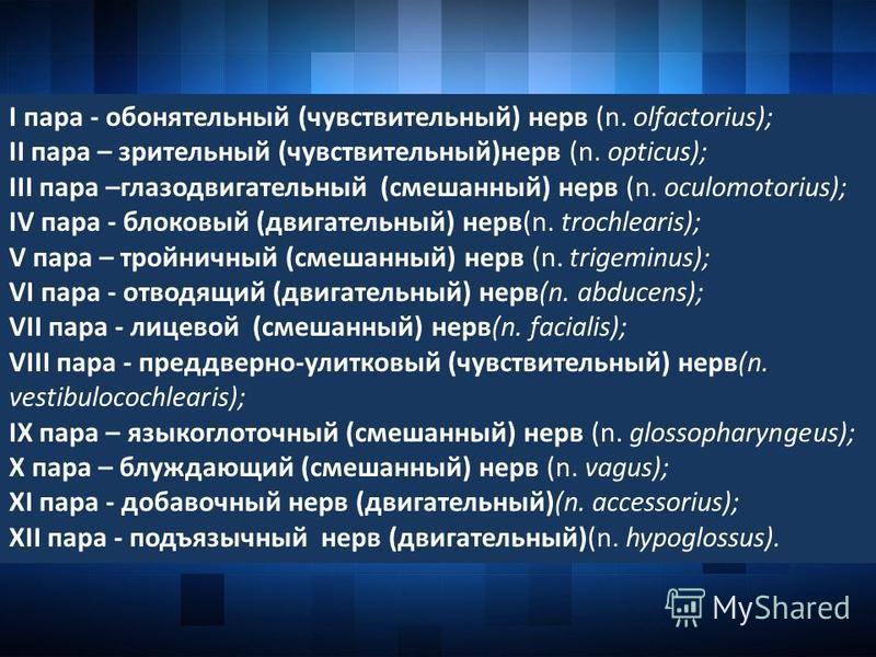 I пара - обонятельный (чувствительный) нерв (n. olfactorius); II пара – зрительный (чувствительный)нерв (n. opticus); III пара –глазодвигательный (смешанный) нерв (n. oculomotorius); IV пара - блоковый (двигательный) нерв(n. trochlearis); V пара – тр