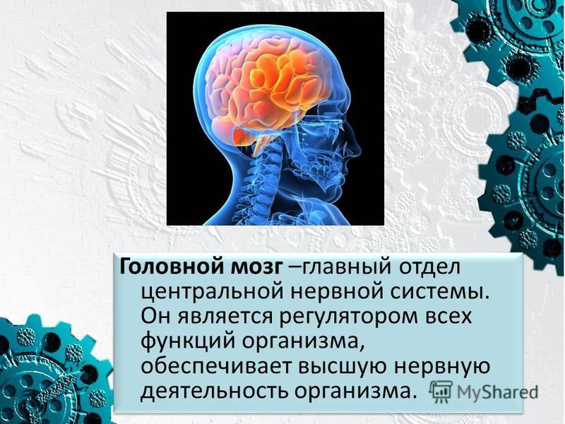 Головной мозг –главный отдел центральной нервной системы. Он является регулятором всех функций организма, обеспечивает высшую нервную деятельность организма.
