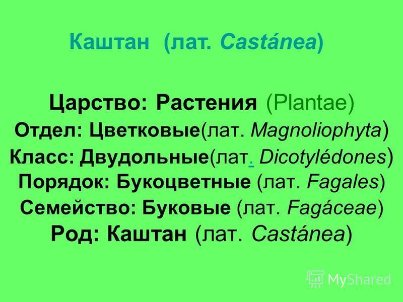 Царство: Растения (Plantae) Отдел: Цветковые(лат. Magnoliophyta ) Класс: Двудольные(лат. Dicotylédones ) Порядок: Букоцветные (лат. Fagales) Семейство: Буковые (лат. Fagáceae) Род: Каштан (лат. Castánea). Каштан (лат. Castánea)