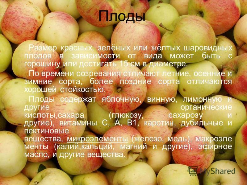Плоды Размер красных, зелёных или жёлтых шаровидных плодов в зависимости от вида может быть с горошину или достигать 15 см в диаметре. По времени созревания отличают летние, осенние и зимние сорта, более поздние сорта отличаются хорошей стойкостью. П