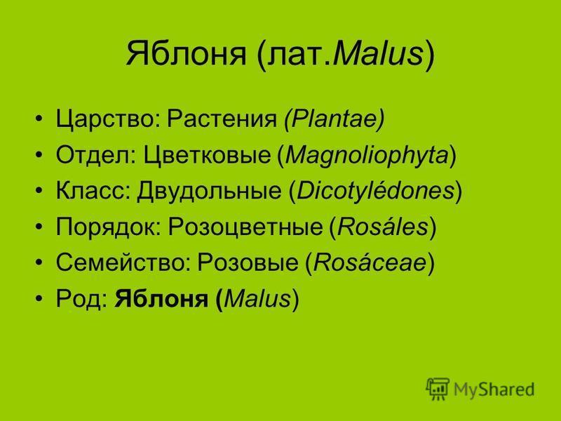 Яяяяяяблоня (лат.Malus) Царство: Растения (Plantae) Отдел: Цветковые (Magnoliophyta) Класс: Двудольные (Dicotylédones) Порядок: Розоцветные (Rosáles) Семейство: Розовые (Rosáceae) Род: Яяяяяяблоня (Malus)