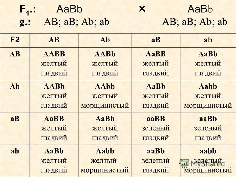 F 1.: АаВb АаВ b g.: АВ; аВ; Аb; ab АВ; аВ; Аb; ab F2 ABAbaBab АВAABB желтый гладкий AABb желтый гладкий AaBB желтый гладкий AaBb желтый гладкий АbАbAABb желтый гладкий AAbb желтый морщинистый AaBb желтый гладкий Aabb желтый морщинистый aBAaBB желтый