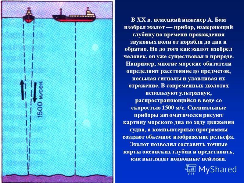 В XX в. немецкий инженер А. Бам изобрел эхолот прибор, измеряющий глубину по времени прохождения звуковых волн от корабля до дна и обратно. Но до того как эхолот изобрел человек, он уже существовал в природе. Например, многие морские обитатели опреде