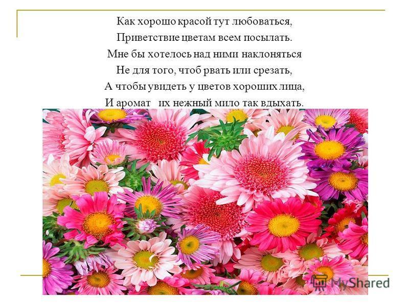 Как хорошо красой тут любоваться, Приветствие цветам всем посылать. Мне бы хотелось над ними наклоняться Не для того, чтоб рвать или срезать, А чтобы увидеть у цветов хороших лица, И аромат их нежный мило так вдыхать.