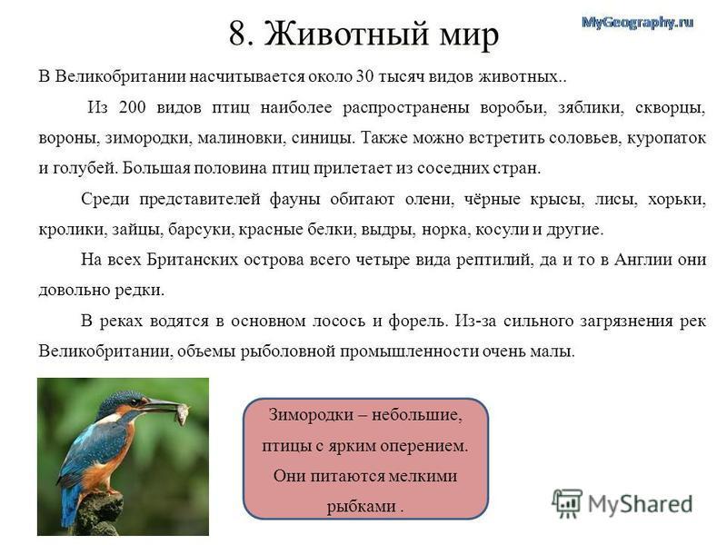 Зимородки – небольшие, птицы с ярким оперением. Они питаются мелкими рыбками. 8. Животный мир В Великобритании насчитывается около 30 тысяч видов животных.. Из 200 видов птиц наиболее распространены воробьи, зяблики, скворцы, вороны, зимородки, малин
