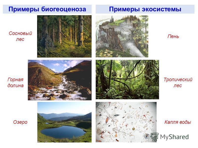 Примеры биогеоценоза Примеры экосистемы Сосновый лес Пень Горная долина Тропический лес Озеро Капля воды