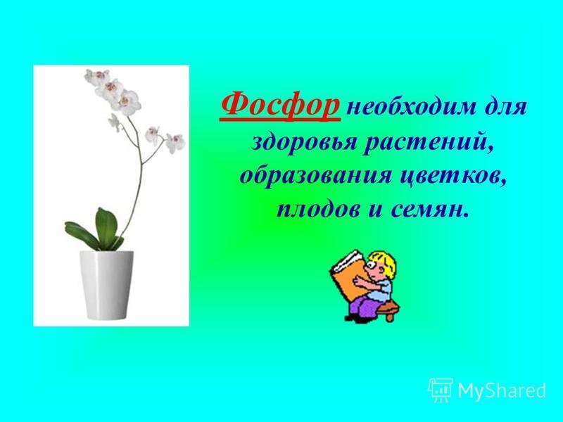 Фосфор необходим для здоровья растений, образования цветков, плодов и семян.