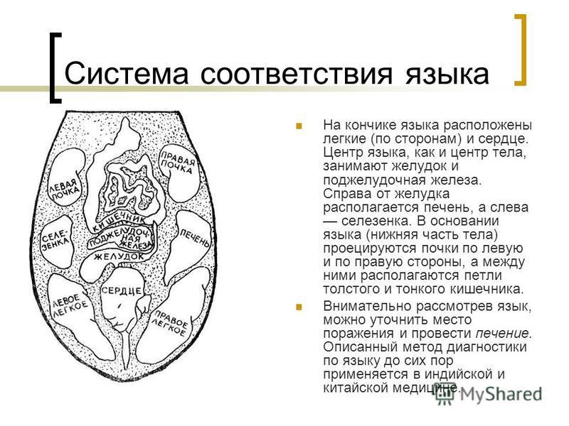 Система соответствия языка На кончике языка расположены легкие (по сторонам) и сердце. Центр языка, как и центр тела, занимают желудок и поджелудочная железа. Справа от желудка располагается печень, а слева селезенка. В основании языка (нижняя часть