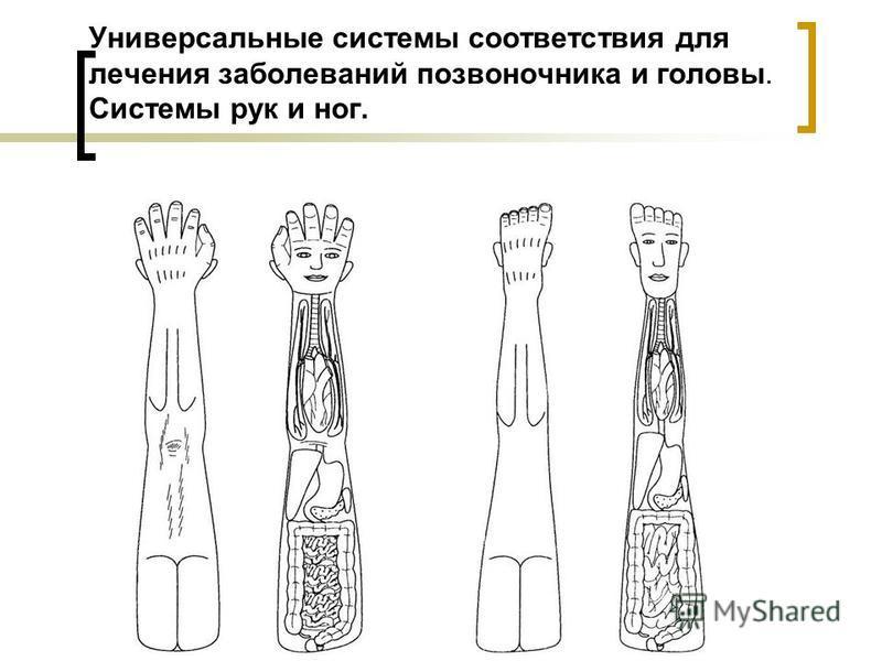 Универсальные системы соответствия для лечения заболеваний позвоночника и головы. Системы рук и ног.