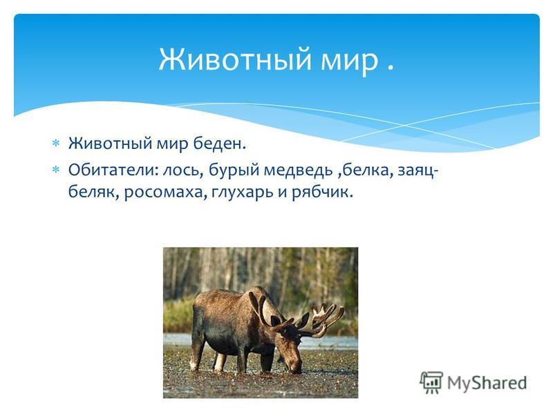 Животный мир беден. Обитатели: лось, бурый медведь,белка, заяц- беляк, росомаха, глухарь и рябчик. Животный мир.