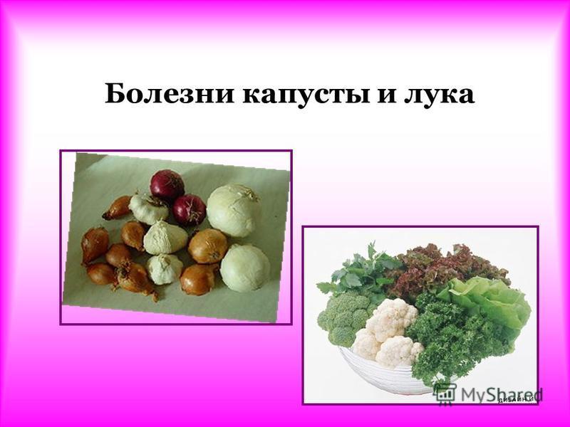 Болезни капусты и лука