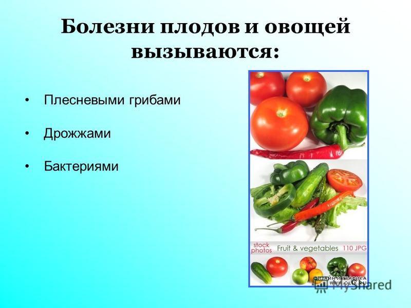 Болезни плодов и овощей вызываются: Плесневыми грибами Дрожжами Бактериями