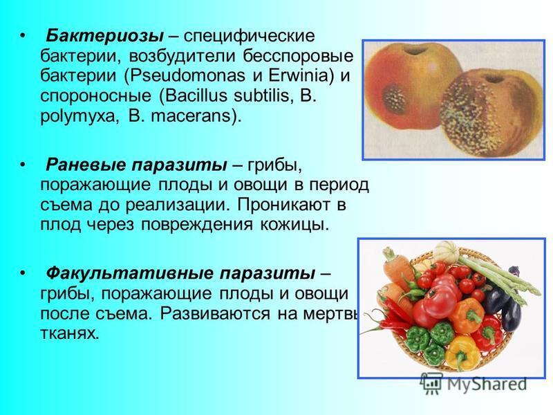 Бактериозы – специфические бактерии, возбудители бесспоровые бактерии (Pseudomonas и Erwinia) и спороносные (Bacillus subtilis, B. polymyxa, B. macerans). Раневые паразиты – грибы, поражающие плоды и овощи в период съема до реализации. Проникают в пл