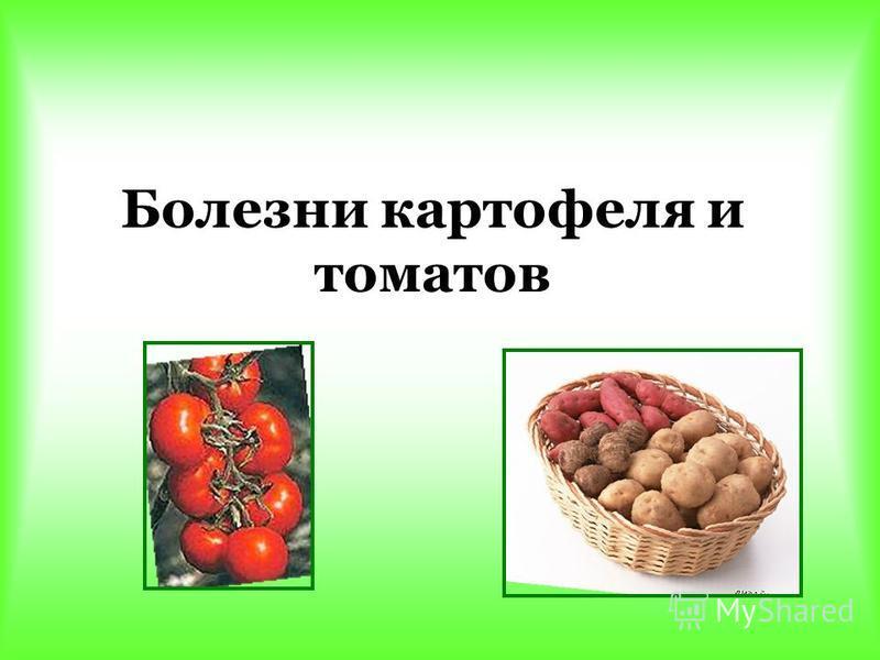 Болезни картофеля и томатов