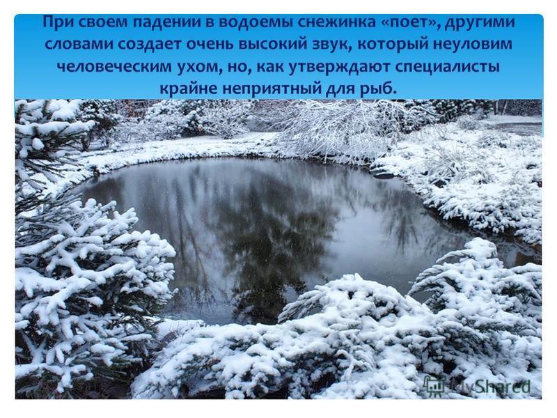 При своем падении в водоемы снежинка «поет», другими словами создает очень высокий звук, который неуловим человеческим ухом, но, как утверждают специалисты крайне неприятный для рыб.