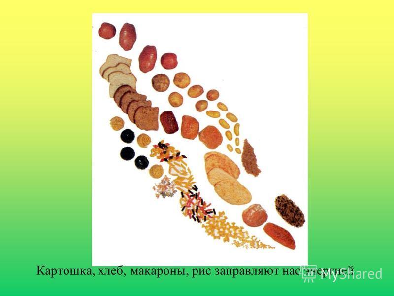 Картошка, хлеб, макароны, рис заправляют нас энергией