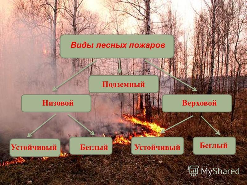 Подземный Виды лесных пожаров Низовой Верховой Устойчивый БеглыйУстойчивый Беглый