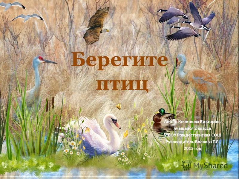Берегите птиц Автор: Кочеткова Виктория, учащаяся 2 класса МБОУ Рождественская СОШ Руководитель Волкова Т.С. 2015 год