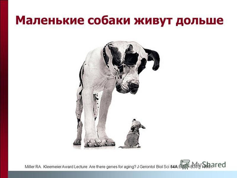 Маленькие собаки живут дольше Miller RA. Kleemeier Award Lecture: Are there genes for aging? J Gerontol Biol Sci 54A:B297–B307, 1999.
