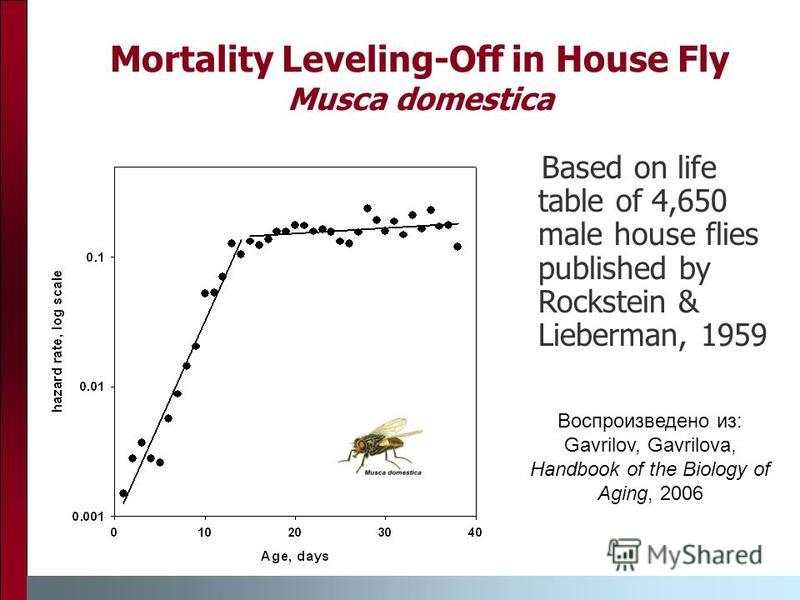 Mortality Leveling-Off in House Fly Musca domestica Based on life table of 4,650 male house flies published by Rockstein & Lieberman, 1959 Воспроизведено из: Gavrilov, Gavrilova, Handbook of the Biology of Aging, 2006