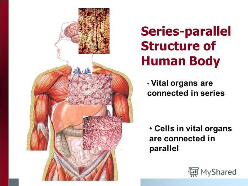 Series-parallel Structure of Human Body Vital organs are connected in series Cells in vital organs are connected in parallel