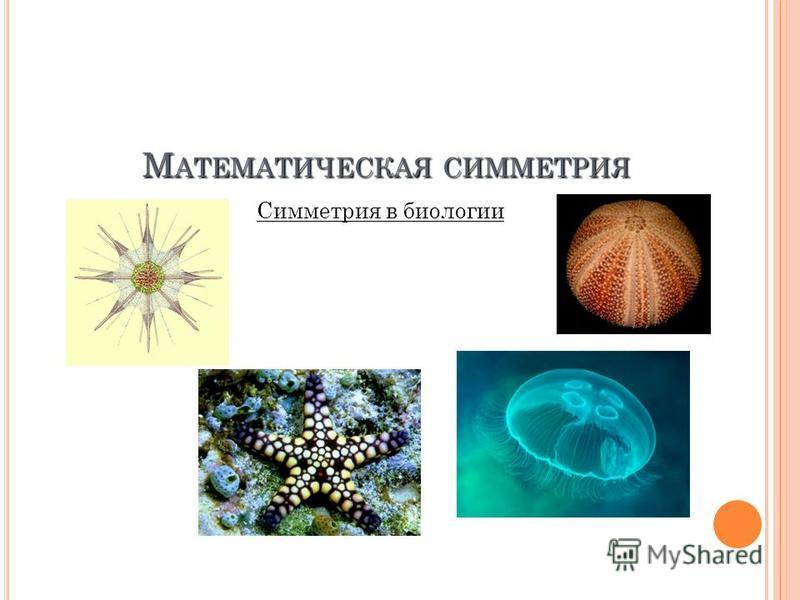 М АТЕМАТИЧЕСКАЯ СИММЕТРИЯ Симметрия в биологии