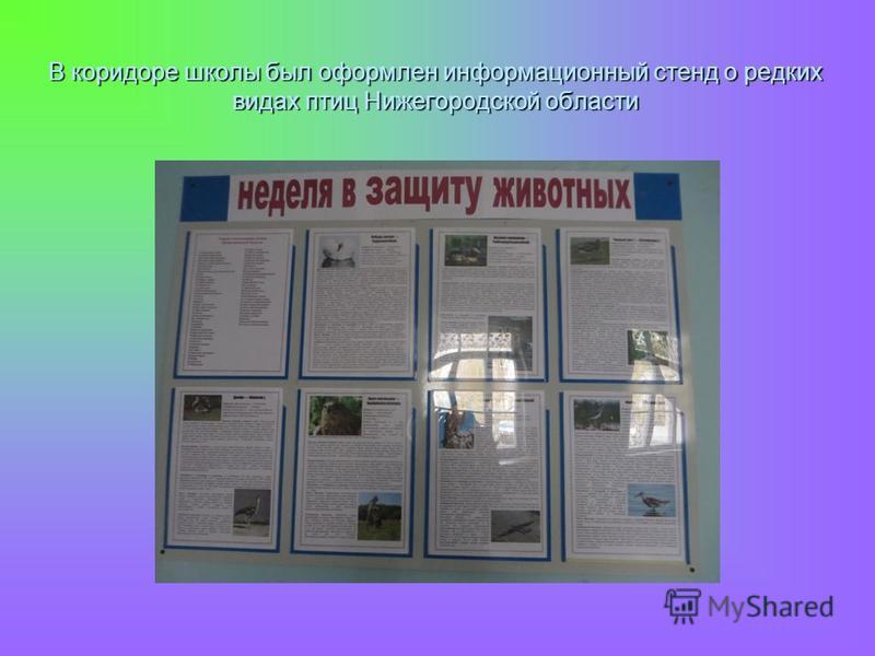 В коридоре школы был оформлен информационный стенд о редких видах птиц Нижегородской области