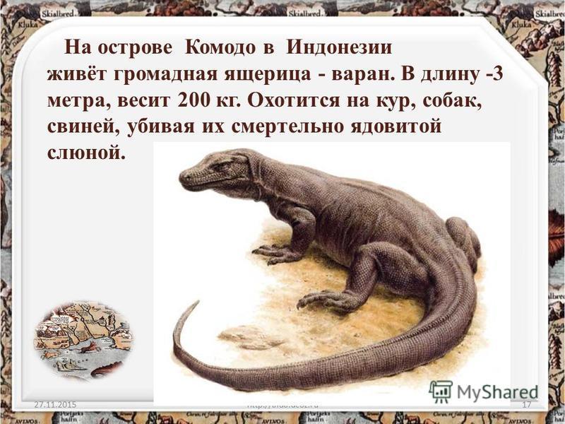 На острове Комодо в Индонезии живёт громадная ящерица - варан. В длину -3 метра, весит 200 кг. Охотится на кур, собак, свиней, убивая их смертельно ядовитой слюной. 27.11.2015http://aida.ucoz.ru17