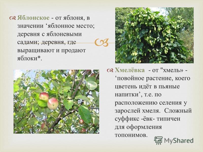 Яблонсоке - от яблоня, в значении яблонное место ; деревня с яблоневыми садами ; деревня, где выращивают и продают яблоки *. Хмелёвка - от