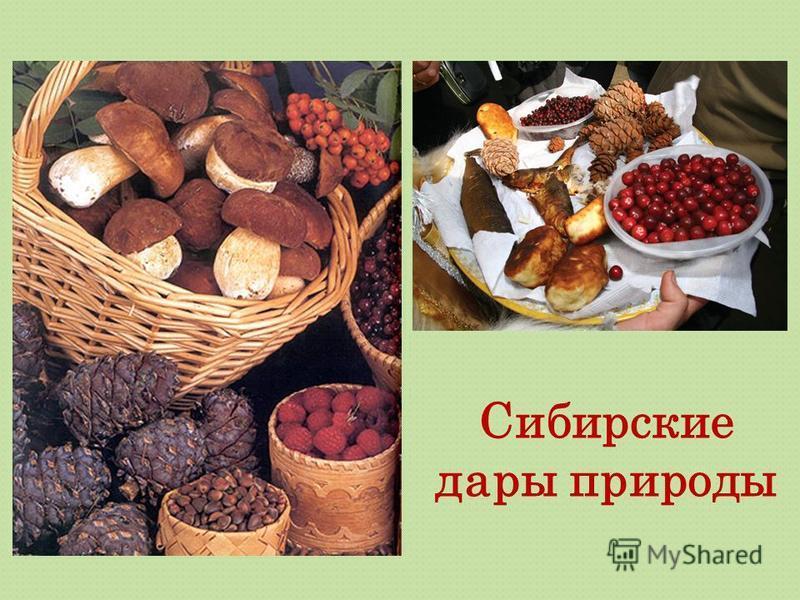 Сибирские дары природы