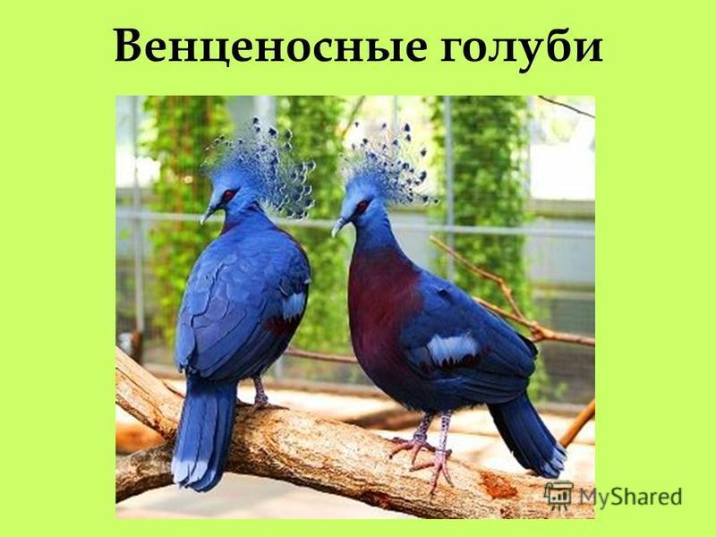 Из представителей фауны Новой Гвинеи наиболее известными являются райские птицы